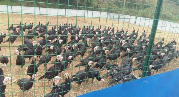 深圳铁丝网厂家介绍怎么让鸭子增肥